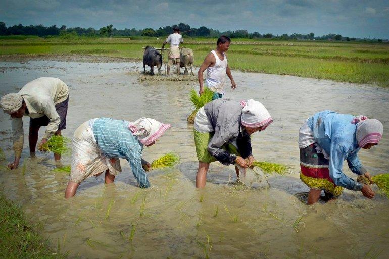 National Farmer's Day,Img Src:Diganta Talukdar