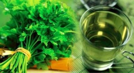 Gyógynövény ivan tea prosztatitisz kezelési receptjei