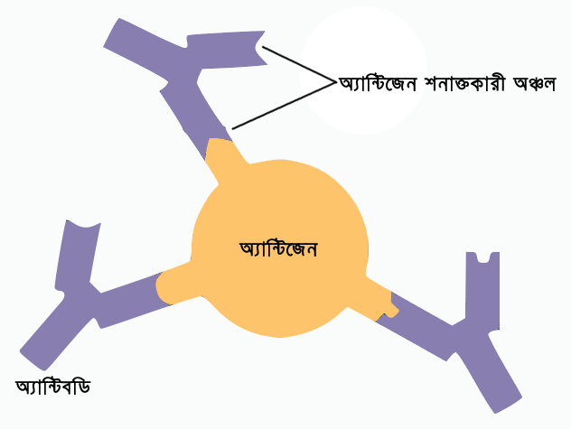 Antibody antigen