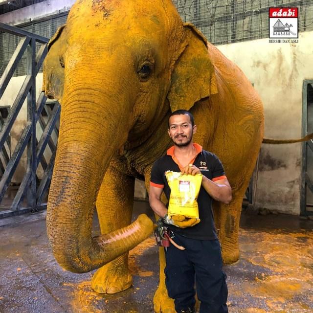 adabi gajah