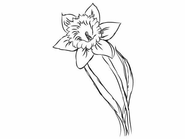 Tulipany Do Kolorowania