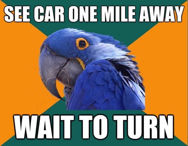 Paranoid Parrot - see car one mile away wait to turn
