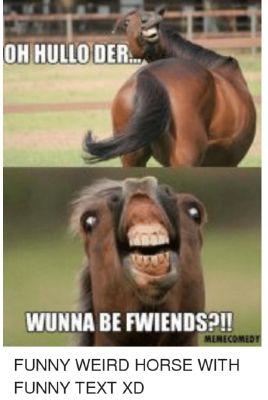 Horse Jokes For Adults : horse, jokes, adults, Horse, Jokes, Whatever, Want., Random, Stuff, [Completed,