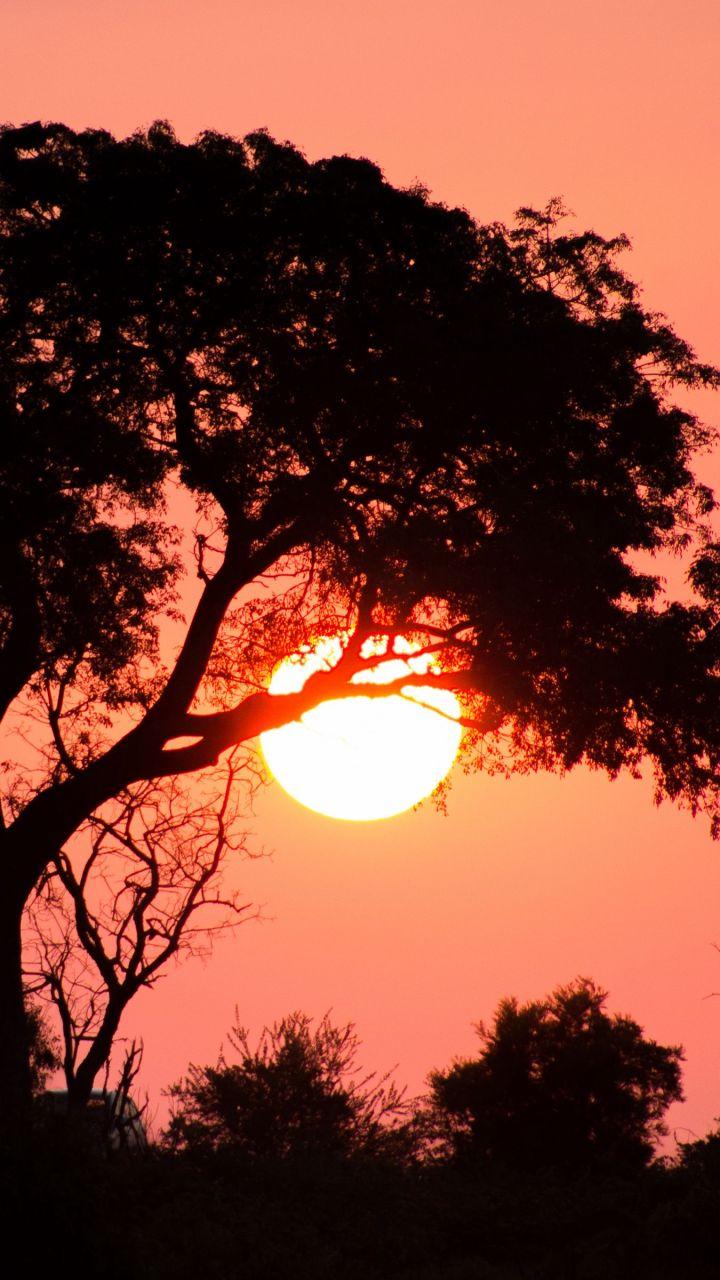 Download Phone wallpaper tree, sun, sunset, dark HD phone background