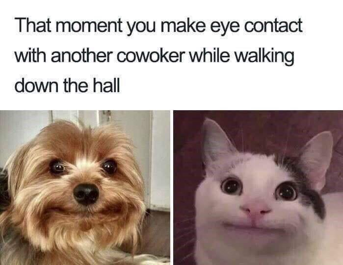 oh hi mark memes