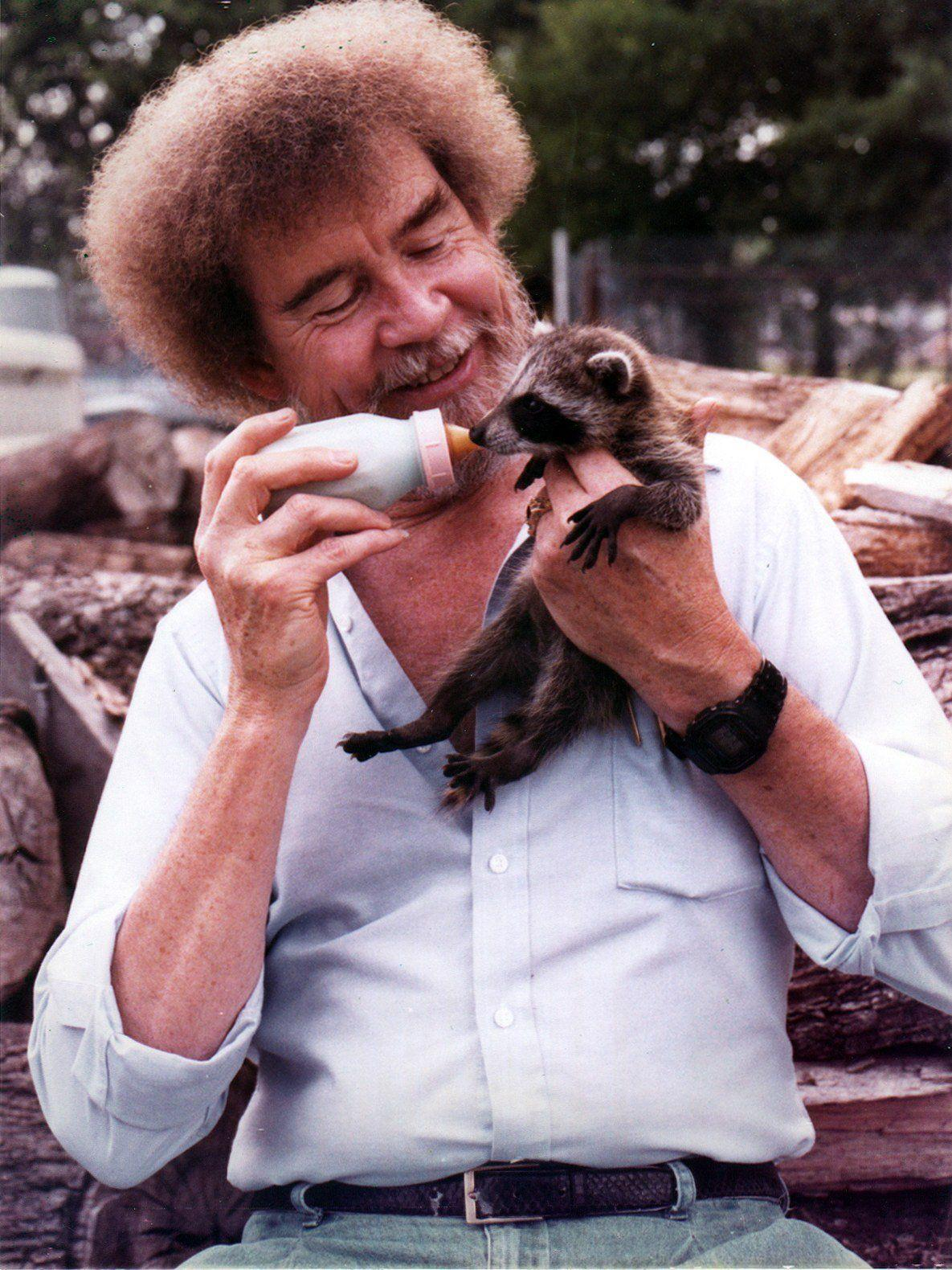 Bob Ross How Did He Die : Today, Birthday., Here's, Picture, Bottle-feeding, Raccoon.