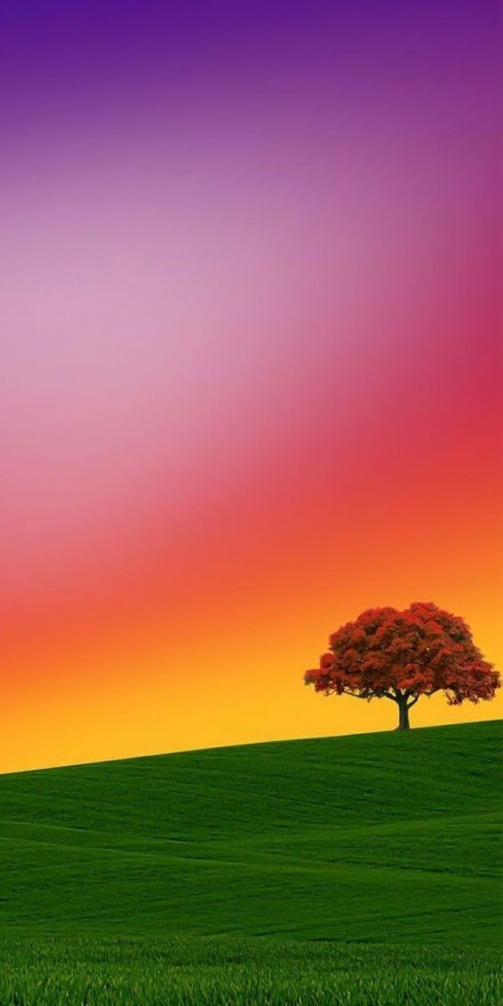 Pink beauty of tree and sky.