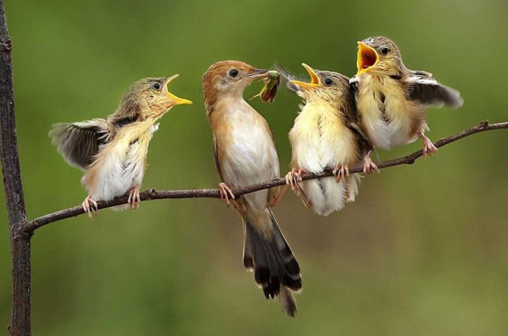 Twitter Bird.