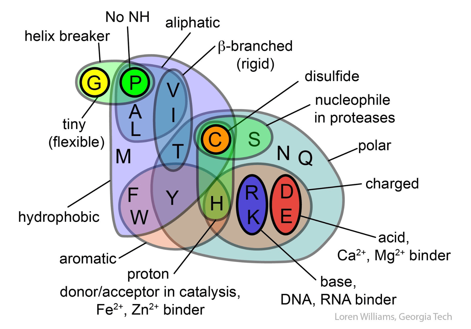 venn diagram comparing dna and rna craftsman chain garage door opener amino acids schematic library showing the properties of 20 created by