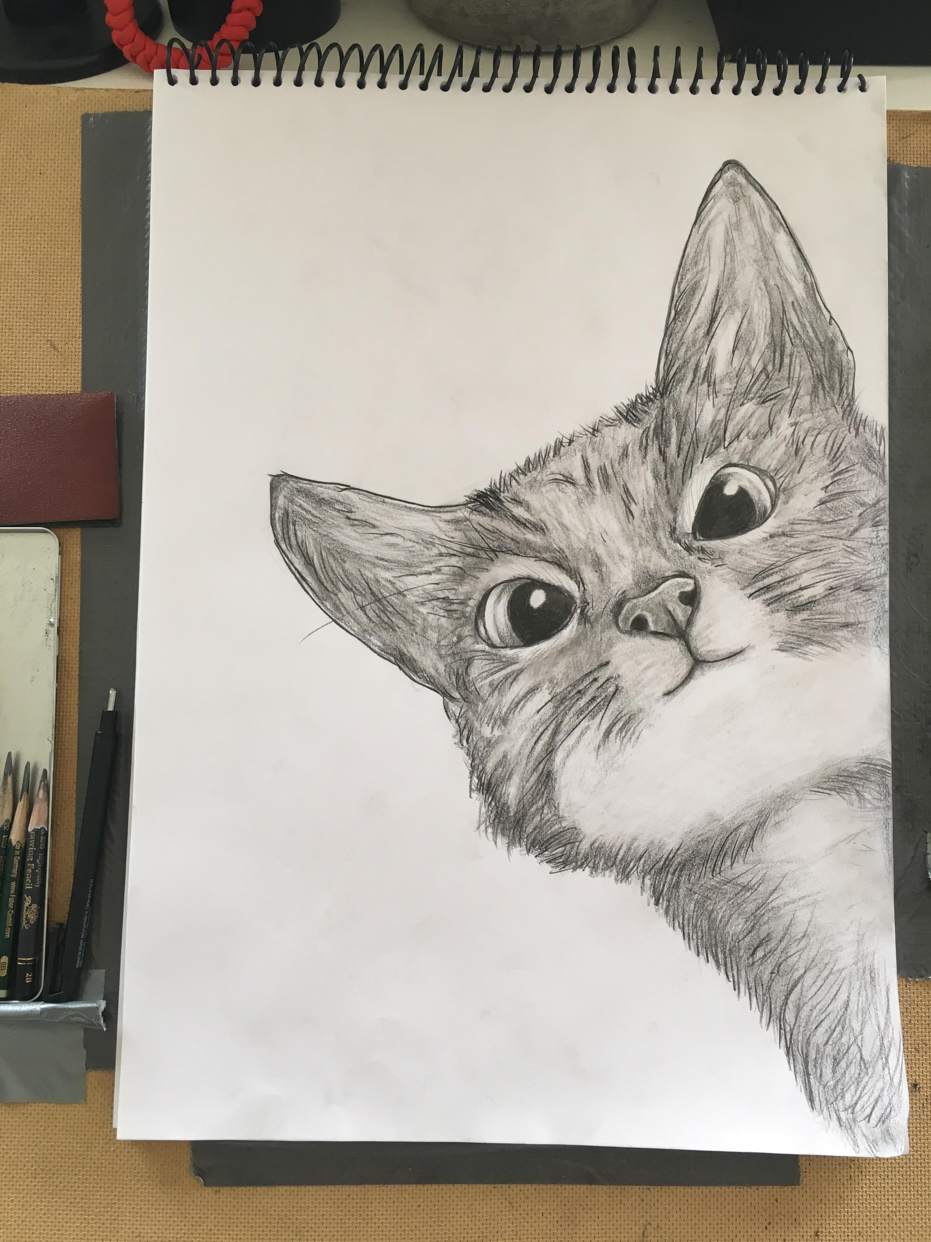 """Cute Cat Pictures To Draw : pictures, Daddy,, Cat"""", Tried!, Drawing"""