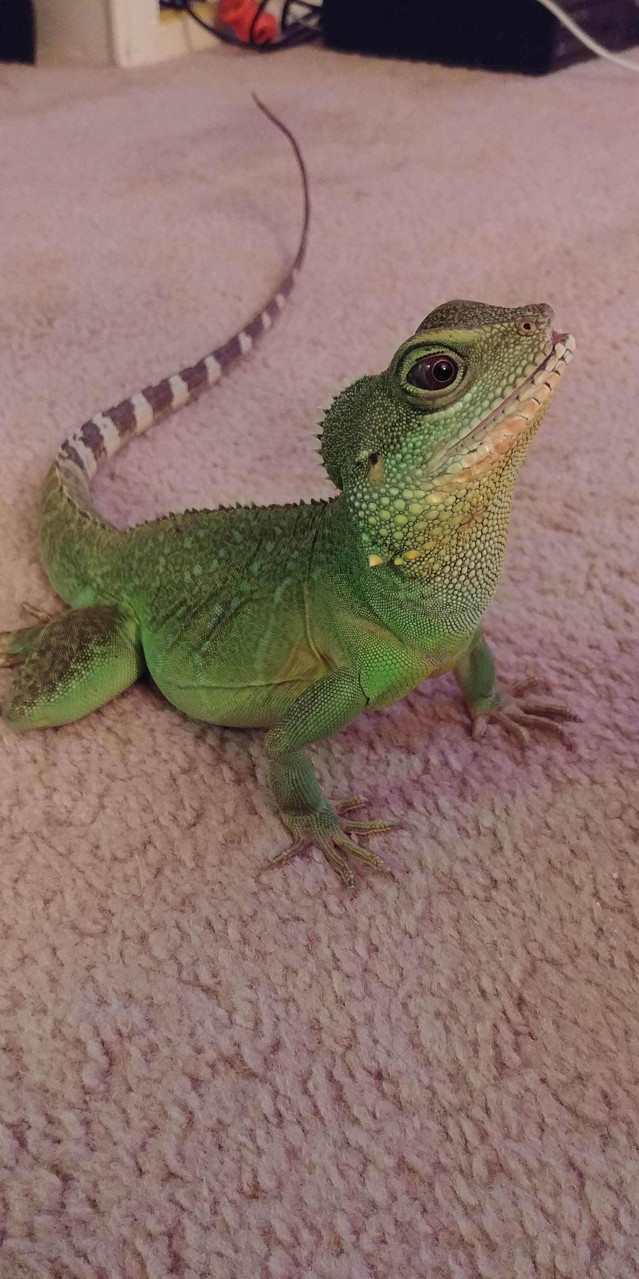 How Much Do Lizards Cost At Petsmart : lizards, petsmart, About, Months, Petsmart, Where, Surfed, Glass, Herself, Mouth