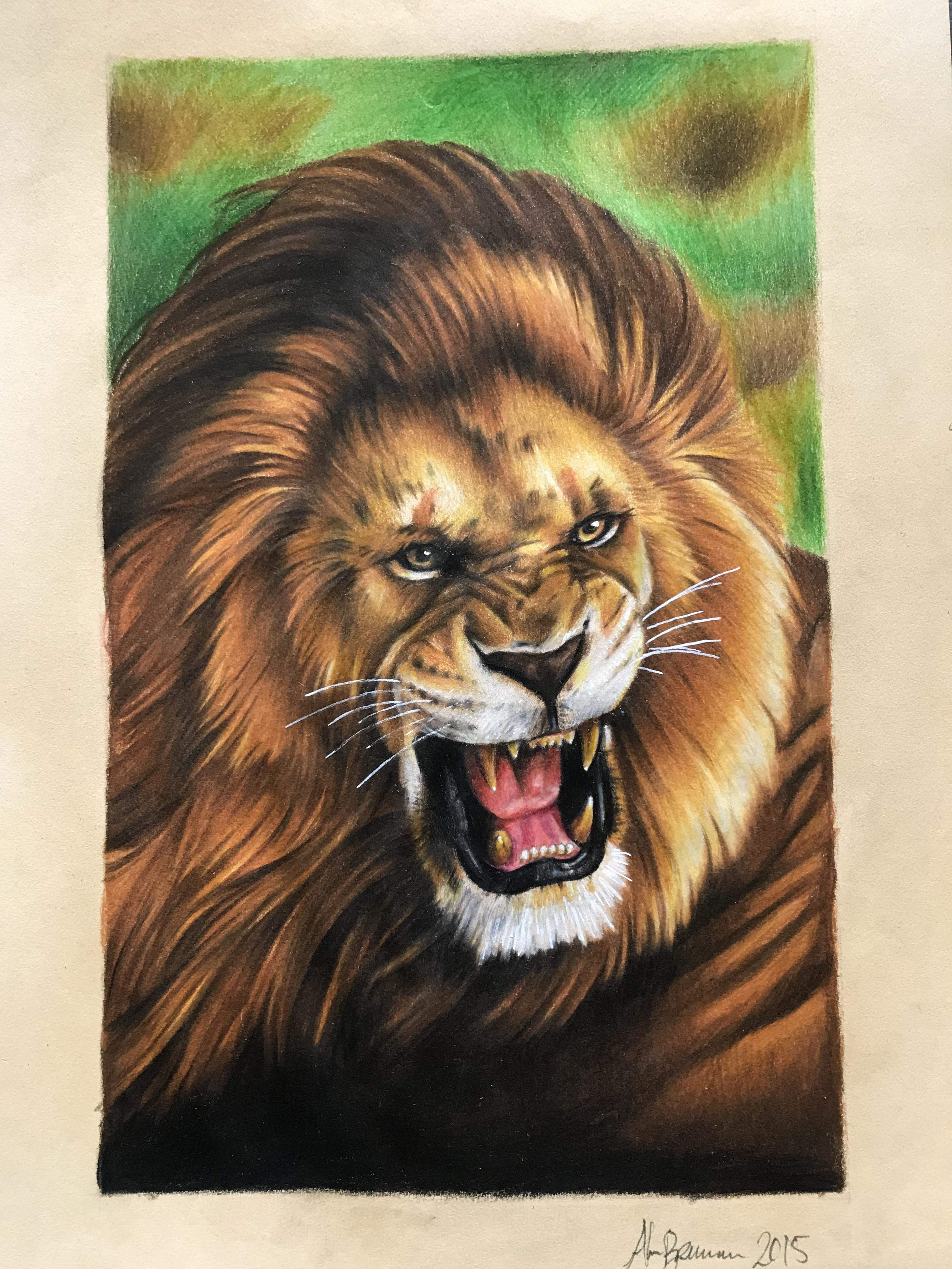 Lion Drawing Color : drawing, color, Color, Pencil, Drawing