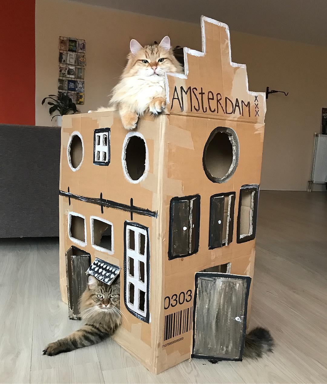 psbattle cardboard cat castle