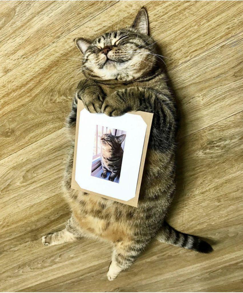 Blessed Cat Images : blessed, images, Blessed, Blessedimages