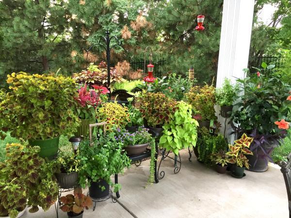 patio container garden gardening