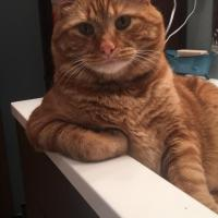 Just discovered this subreddit, so I thought I would post our majestic ginger kitty. His name is Chuck.