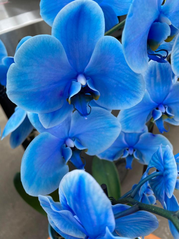 A friend sent me this beautiful shot of these blue flowers