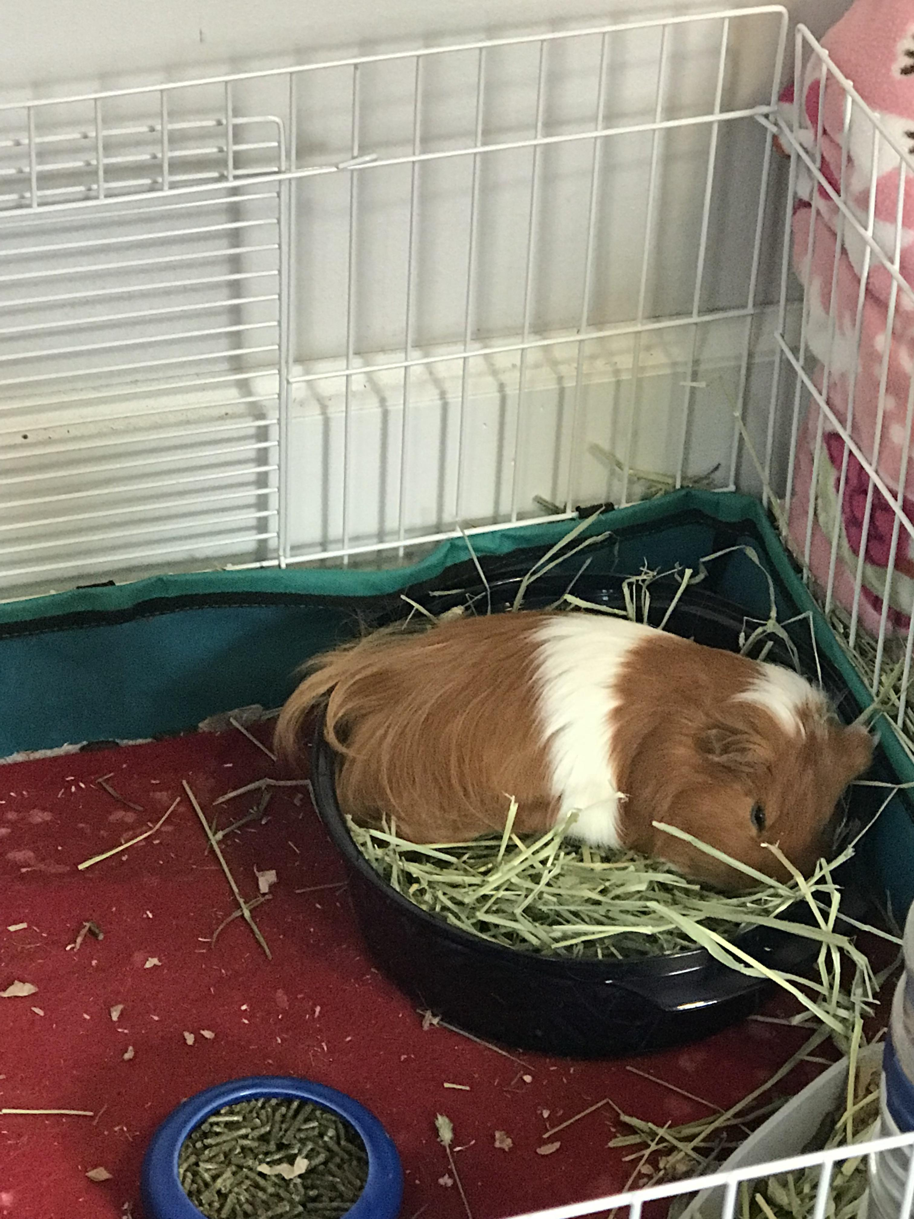 decided to swap out the hay rack for a
