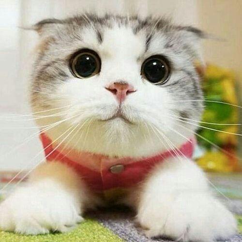 a cute cat aww