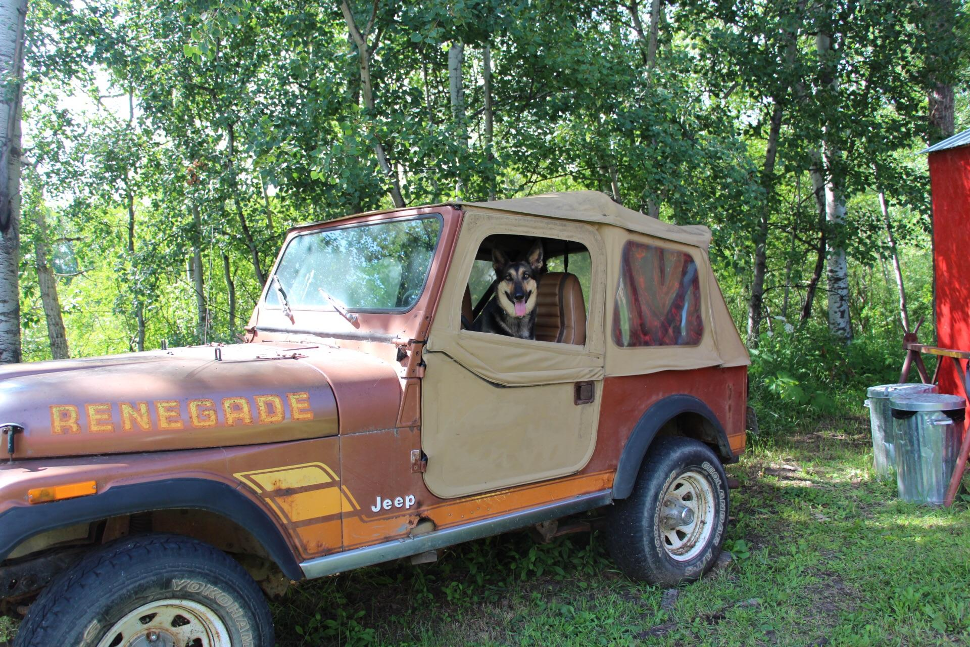hight resolution of my dog loves to get into my old jeep cj7 thinking that i will take her for a ride her name is cj
