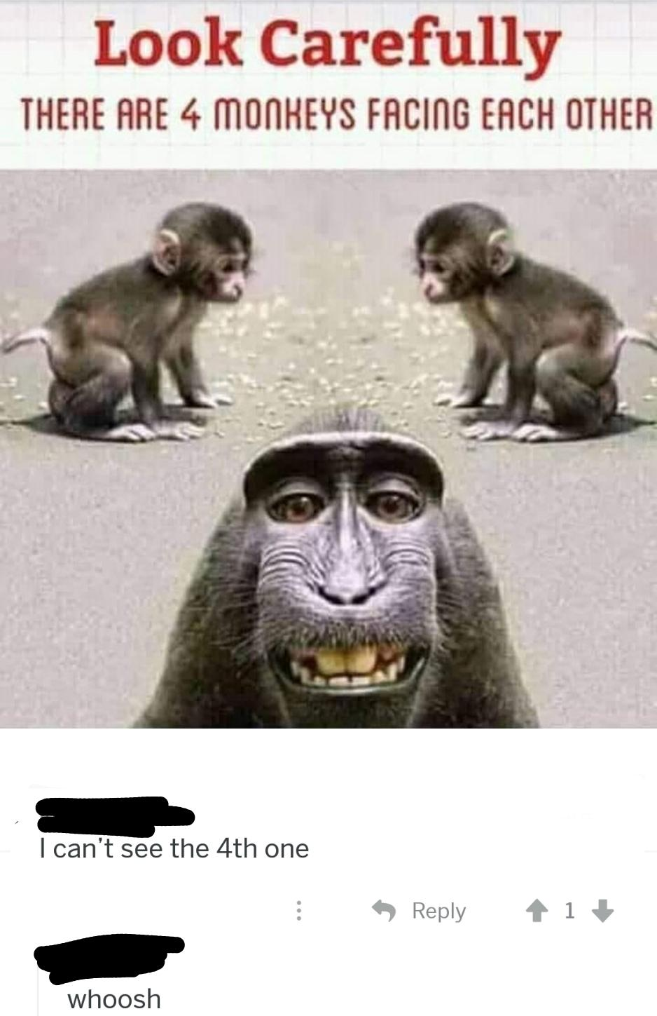 4 Monkeys Images : monkeys, images, Where, Woooosh