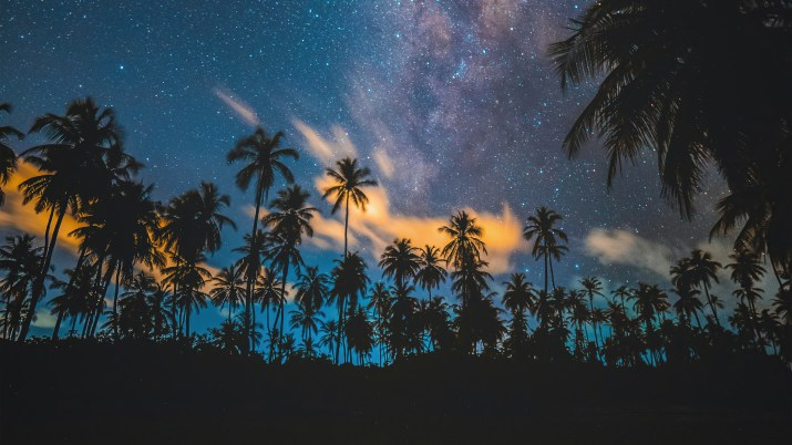 Tropical Palm Trees [1920×1080]