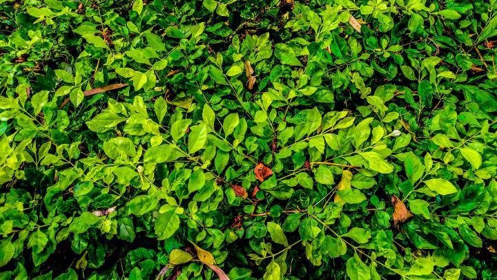 Leaves (3840X2160) 4K