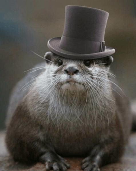 Funny Otter Pictures : funny, otter, pictures, Funny, Otter, Otterable