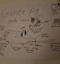 thought you guys might enjoy this guinea pig diagram my little brother drew  [ 4032 x 3024 Pixel ]