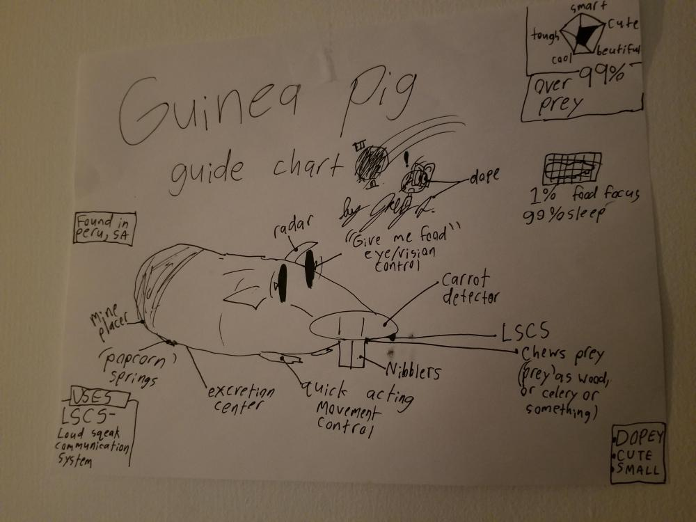 medium resolution of thought you guys might enjoy this guinea pig diagram my little brother drew
