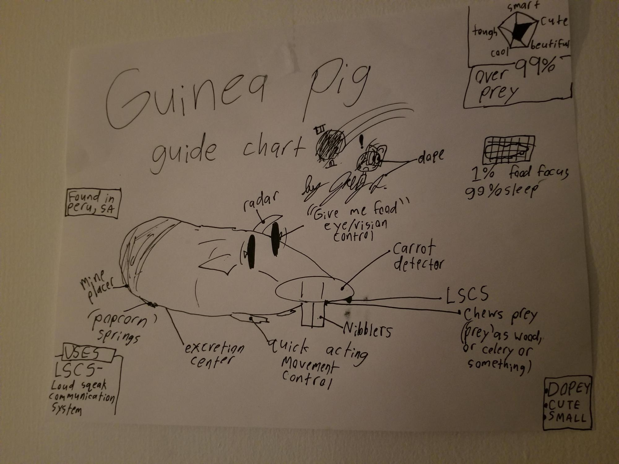 hight resolution of thought you guys might enjoy this guinea pig diagram my little brother drew