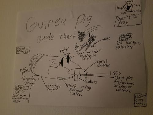 small resolution of thought you guys might enjoy this guinea pig diagram my little brother drew