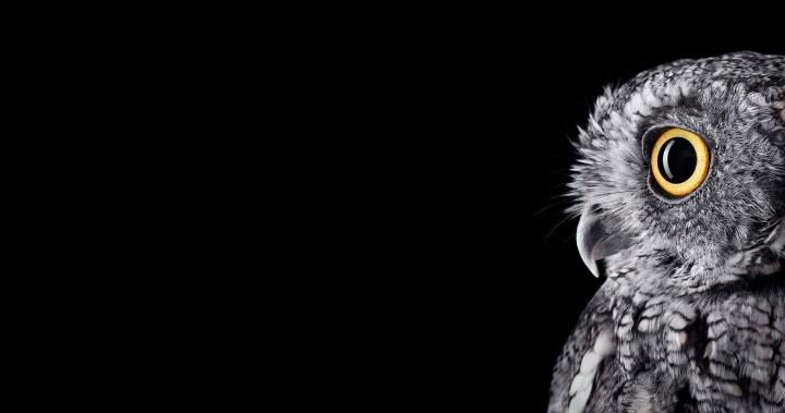 [4096×2160] Owl