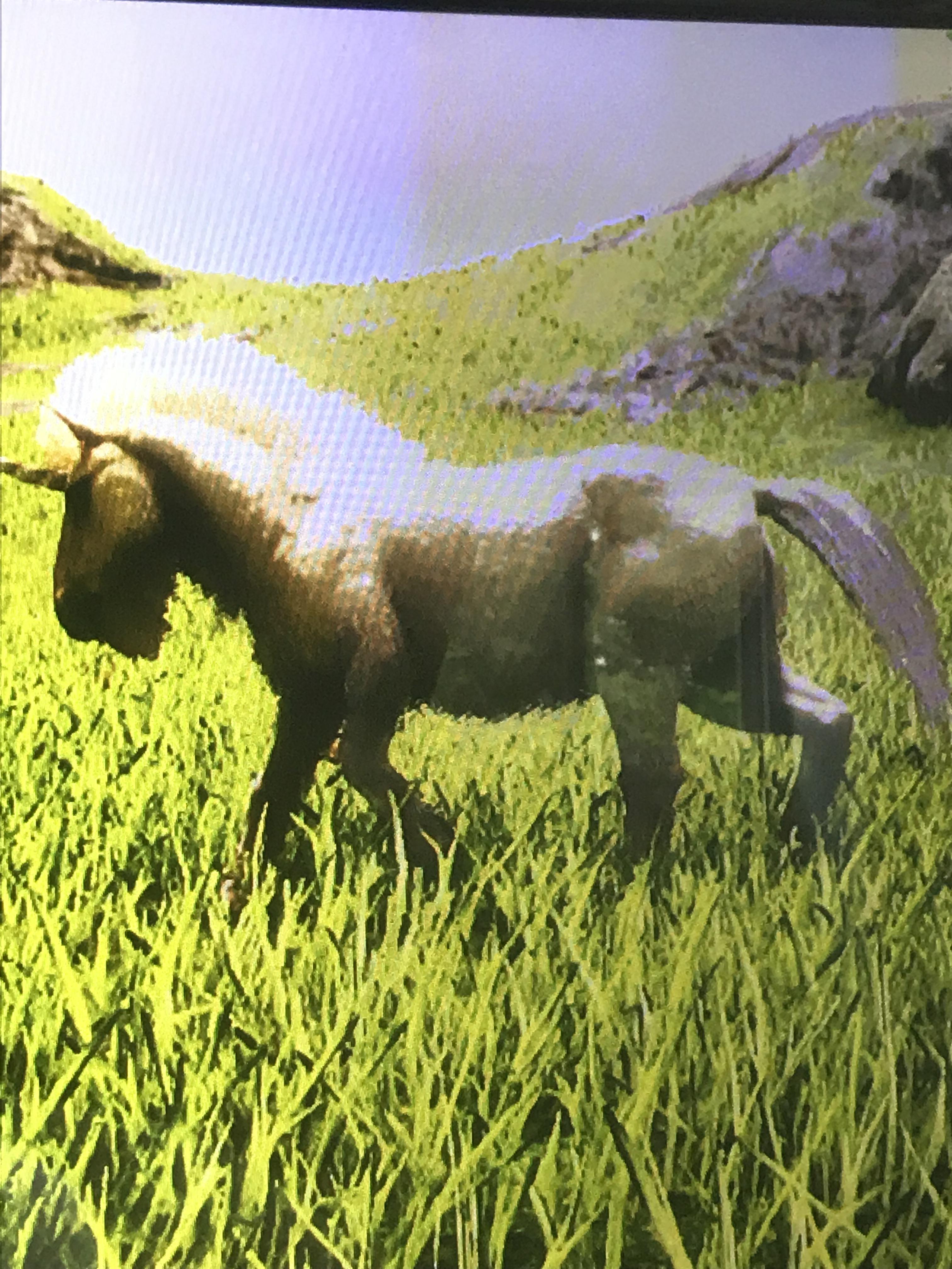 Unicorn | ARK: Survival Plus Wikia | Fandom