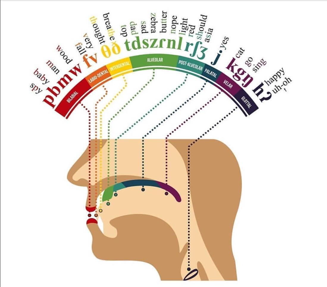Where In Your Mouth English Letters Are Formed Coolguides