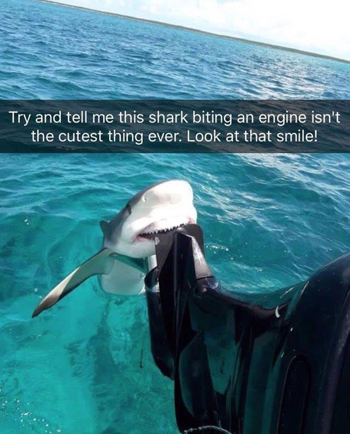Real Baby Shark Pictures : shark, pictures, Shark, TheDepthsBelow