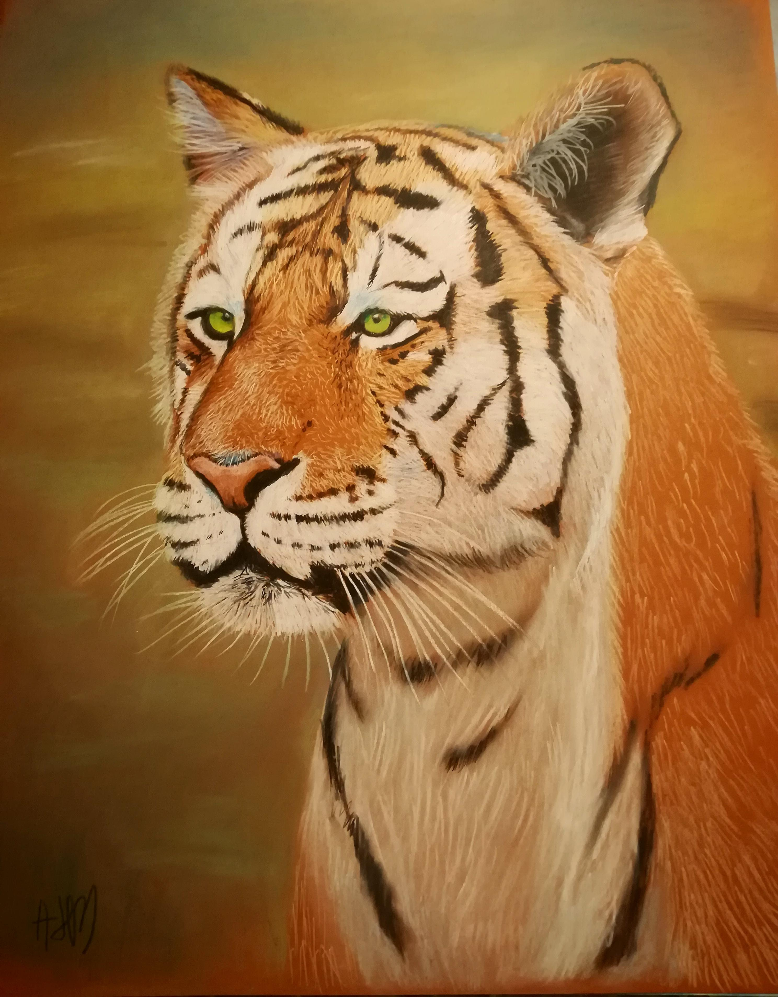 Color Tiger Face Drawing : color, tiger, drawing, Tiger,, Pastels, Color, Pencils, Drawing