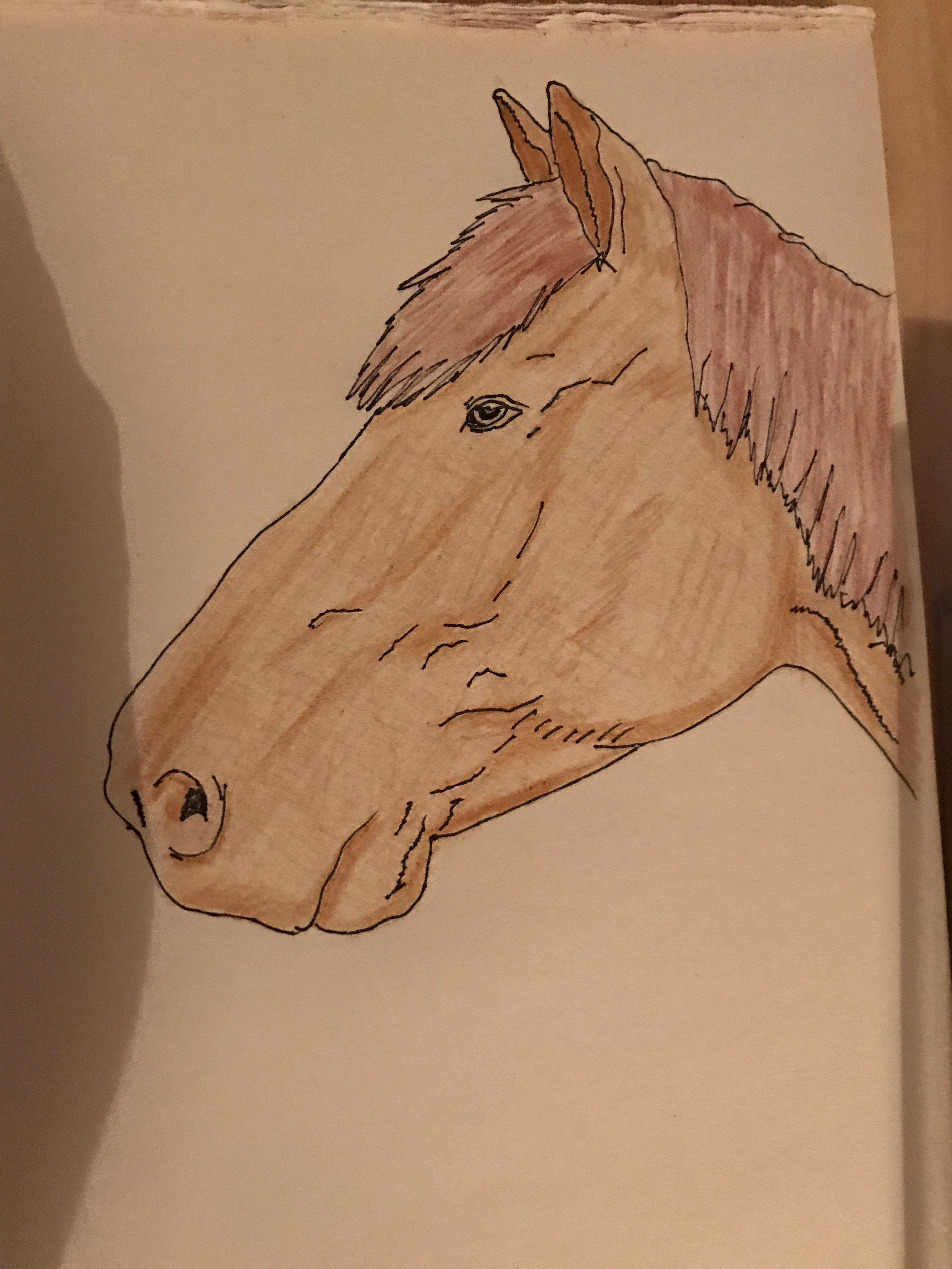 Animal Shading : animal, shading, First, Attempt, Animal, Actual, Using, Colouring, Pencils, Shading., Comments, Advice, Welcome, Learntodraw