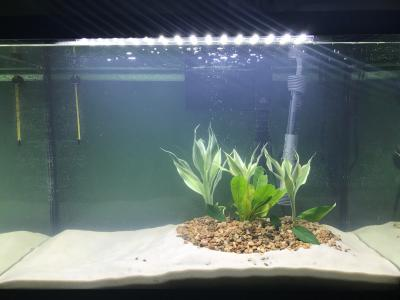 My attempt to make an island aquascape i dont know what i ...