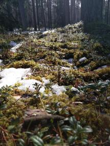 Estonian Forrest In Spring Cute Pic