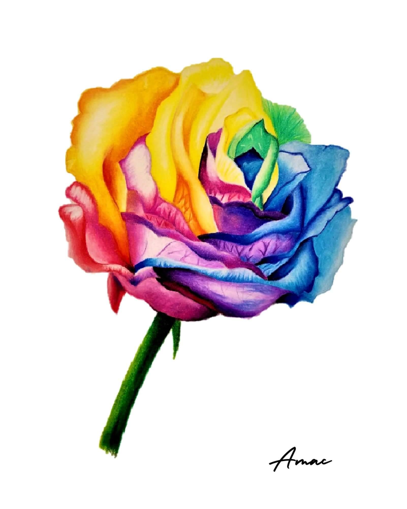 Rainbow Rose Drawing : rainbow, drawing, Rainbow, Colored, Pencils., Drawing