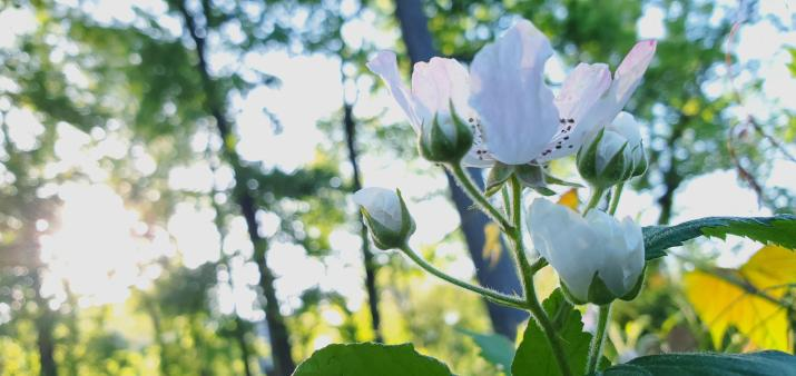 [4032×1908] White flower on a sunny trail