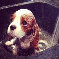 Image result for puppy dog eyes