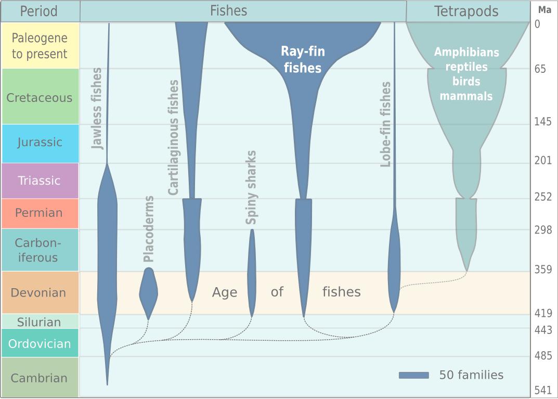 diagram of evolution timeline smoke detector false alarm spindle showing the fish 2013