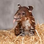 Cutest Baby Horse Ever Exmormon