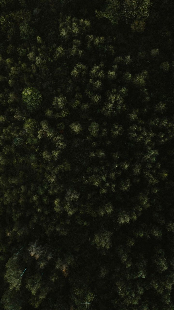 Phone wallpaper trees, forest, green, aerial view, nature HD phone background