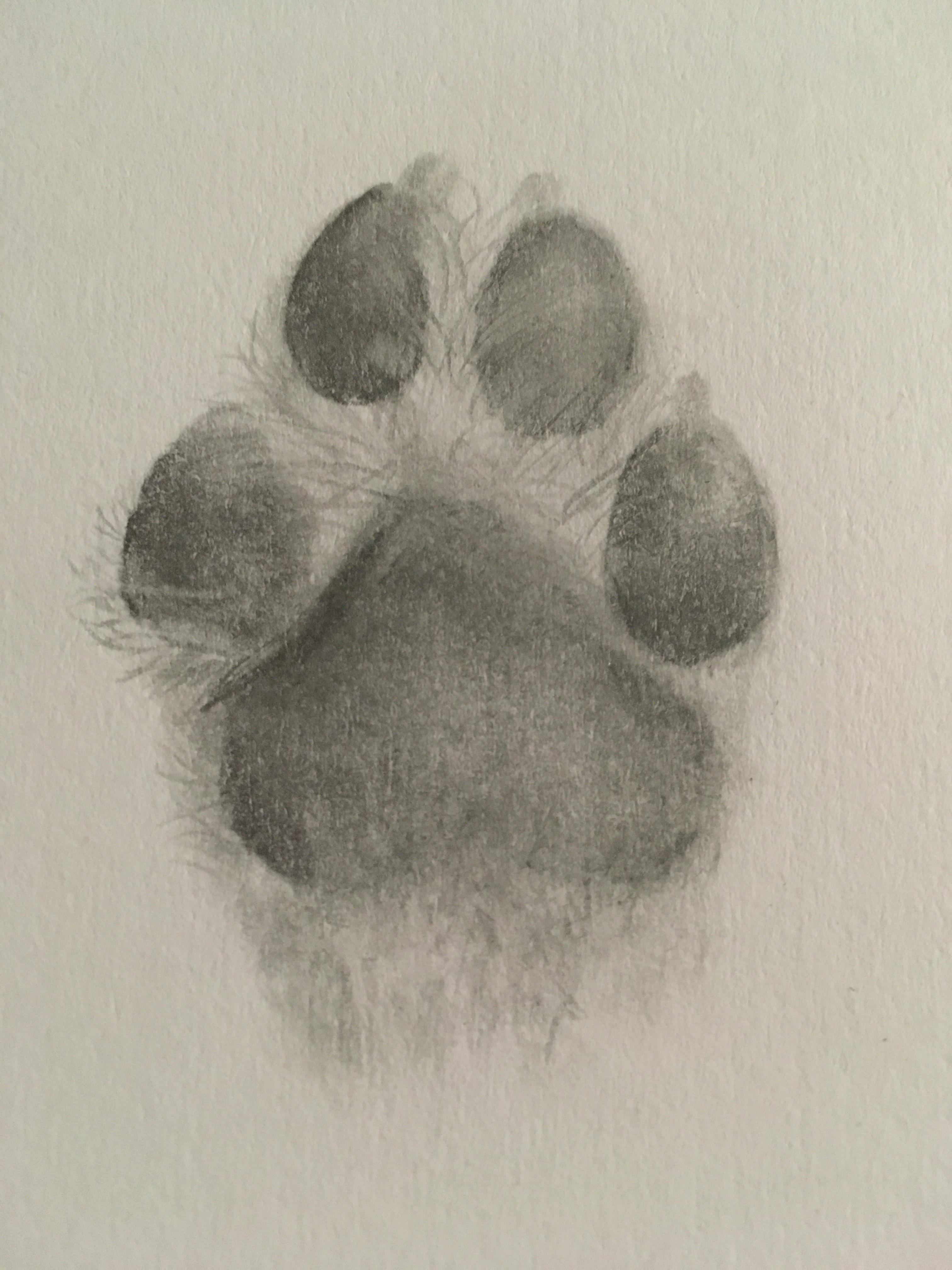 Dog Paw Drawing : drawing, Bored, Quarantine, Drawing, Sketches