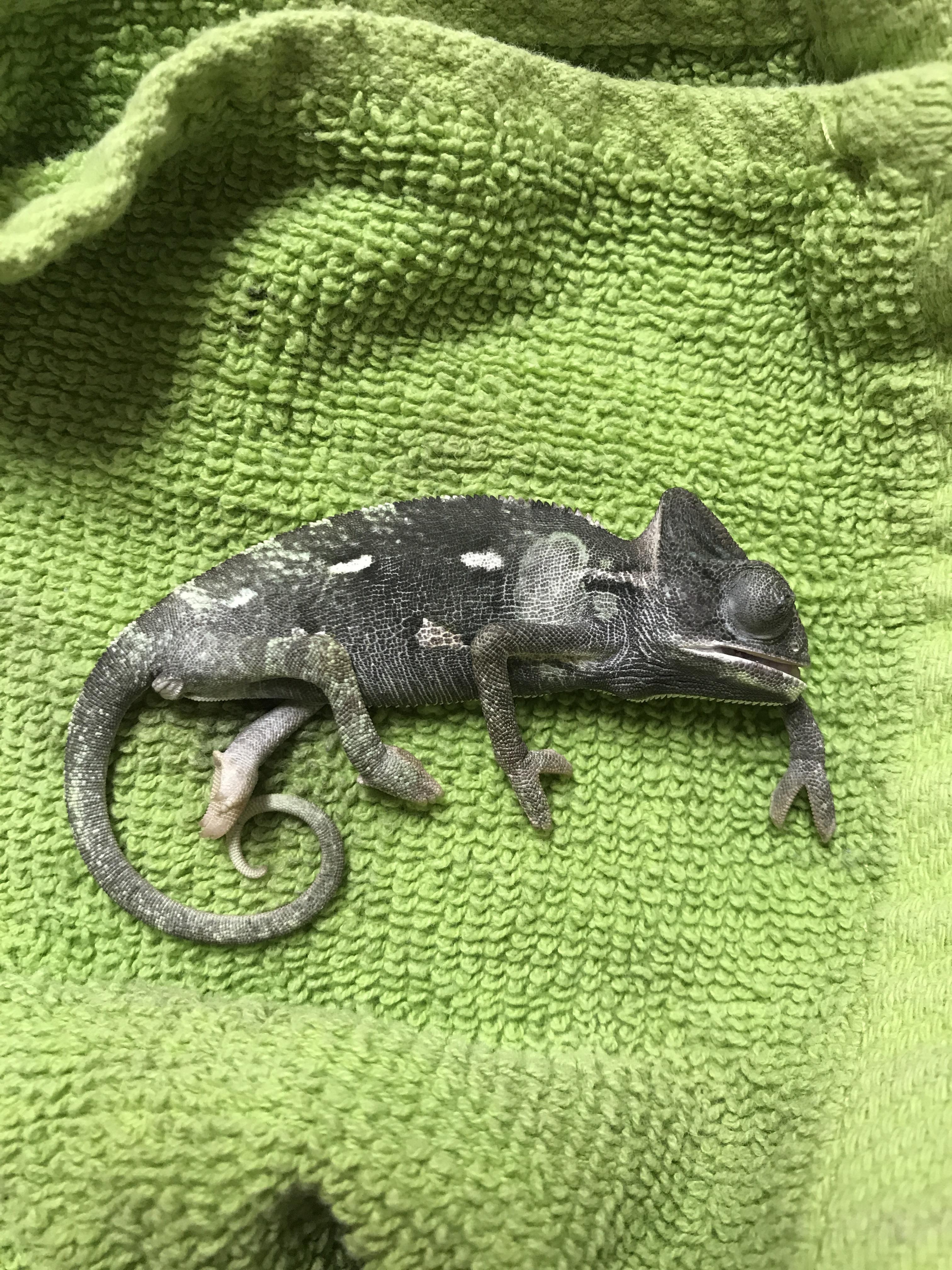 Petsmart Chameleon Cage : petsmart, chameleon, Chameleon, Petsmart, Pet's, Gallery