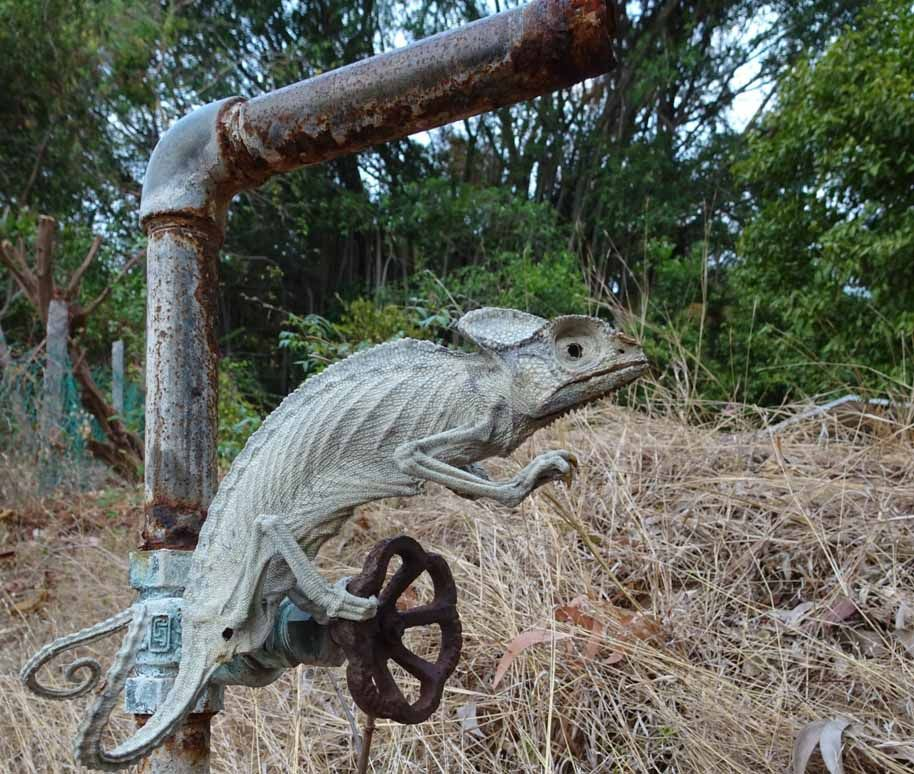 chameleon mummified alive by
