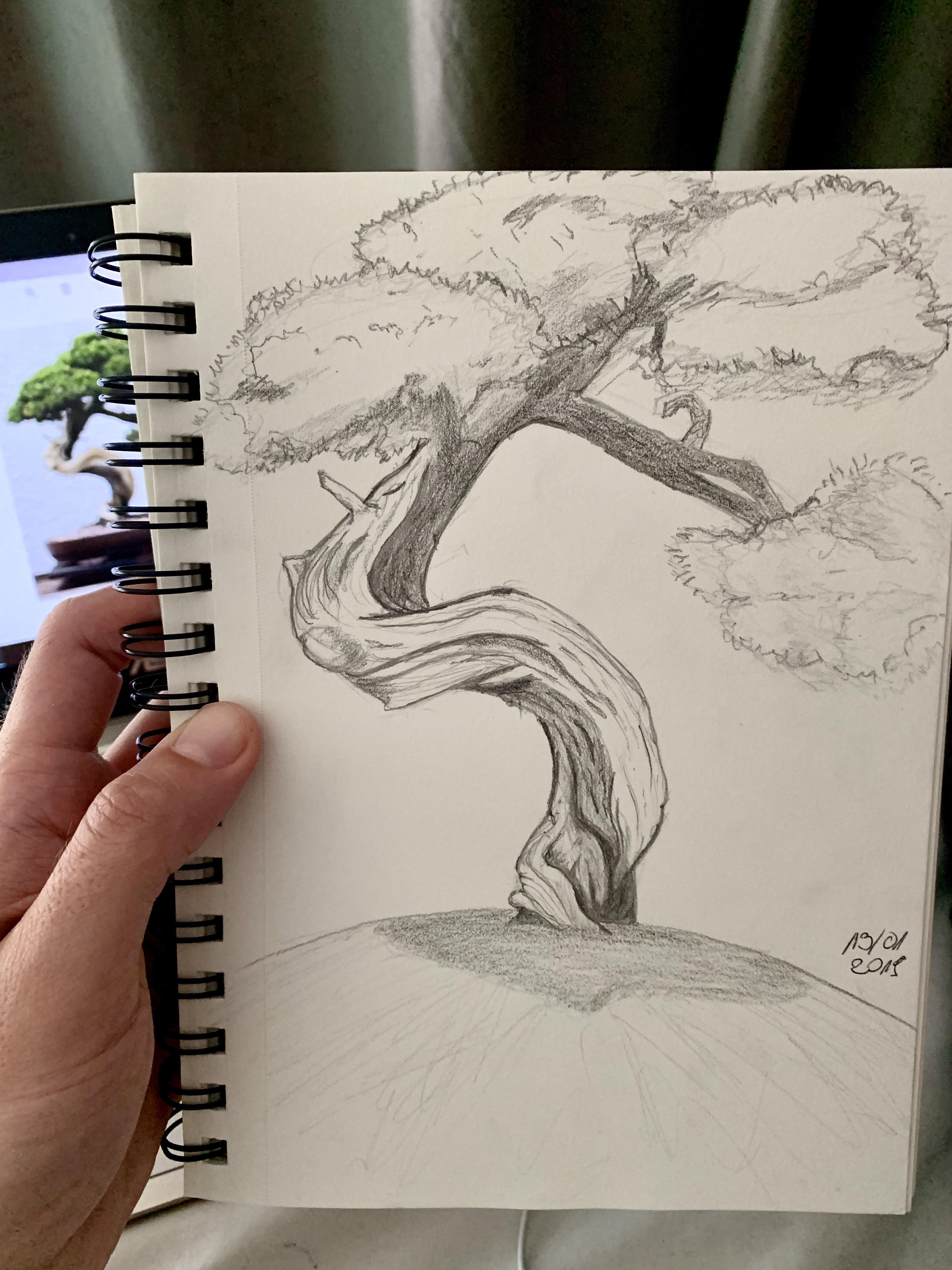Bonsai Drawing : bonsai, drawing, Bonsai, Sketch, Today's, Practice, Learntodraw